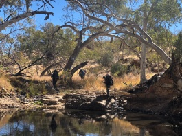 Between Bond Gap and Mulga Camp
